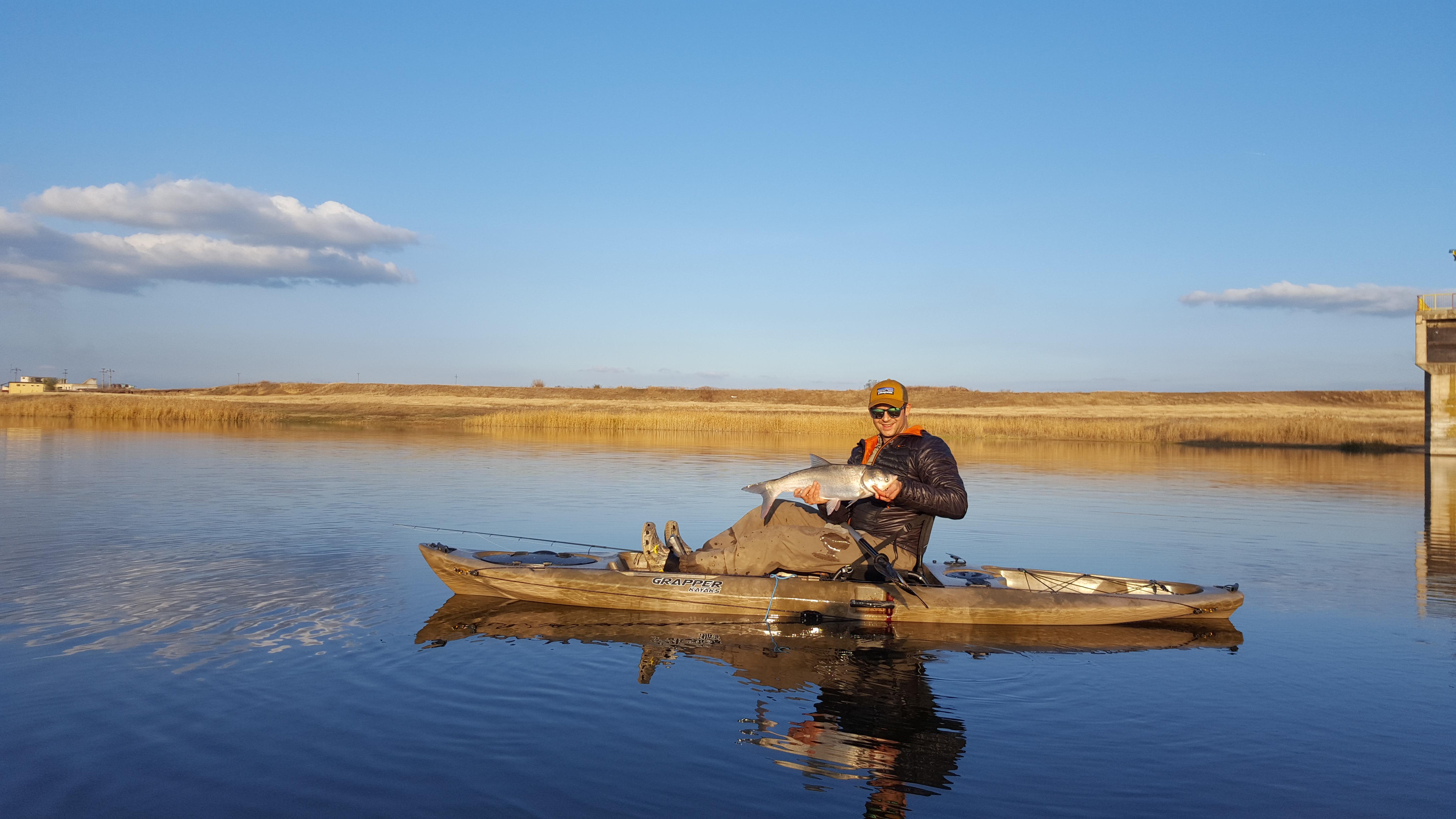Bighead carp Romania